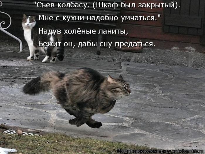 kotomatritsa_y (700x524, 328Kb)