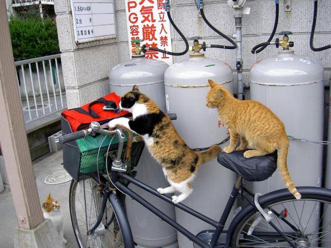 кошки приколы 8 (660x495, 258Kb)