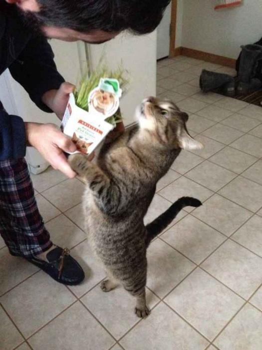 прикольные фото кошек