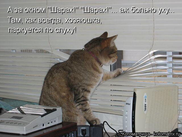 kotomatritsa_8 (640x480, 166Kb)