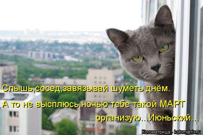 kotomatritsa_f (700x468, 237Kb)