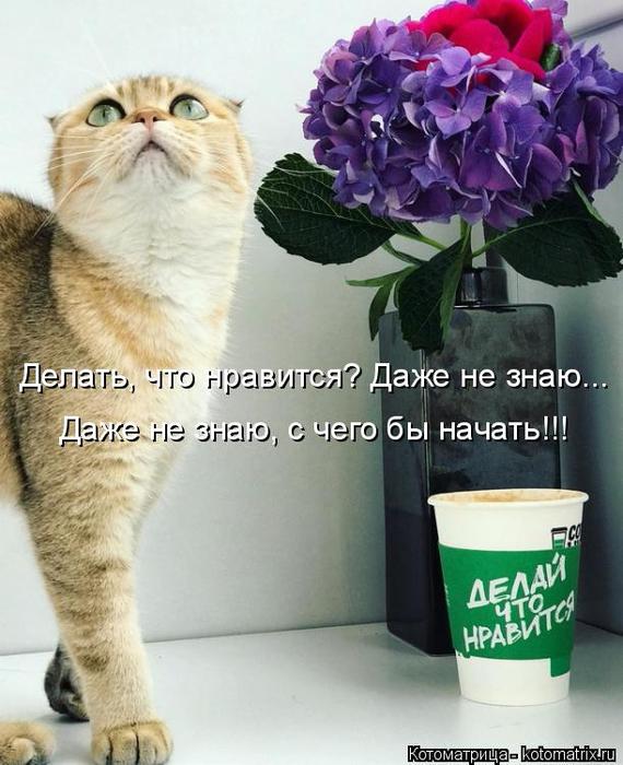 kotomatritsa_Q (570x700, 349Kb)