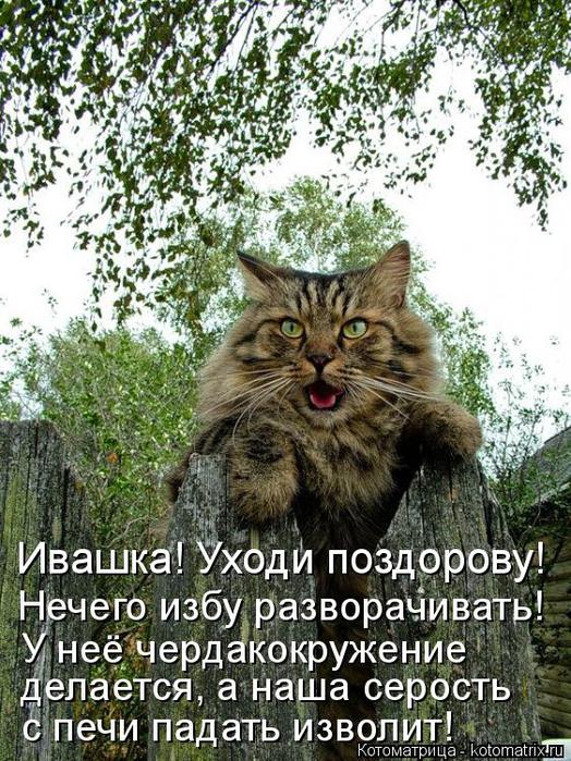 kotomatritsa_R (524x700, 507Kb)