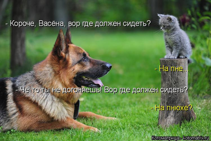 kotomatritsa_T (700x466, 364Kb)