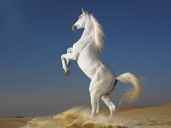 www.GetBg.net_Animals___Horses_The_most_beautiful_horse_in_the_world_053776_ (700x525, 177Kb)