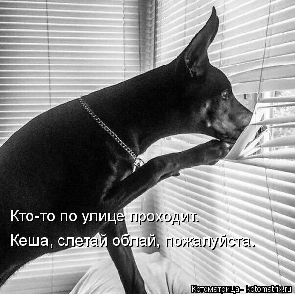 kotomatritsa_1 (600x597, 136Kb)