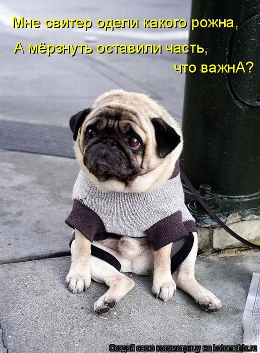 kotomatritsa_L (515x700, 354Kb)