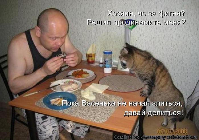 kotomatritsa_Q (1) (700x493, 316Kb)