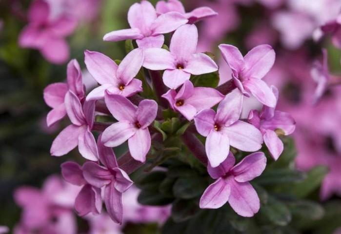 142850160 071218 1000 4 Смертельно опасные цветы, которые мы держим рядом с собой