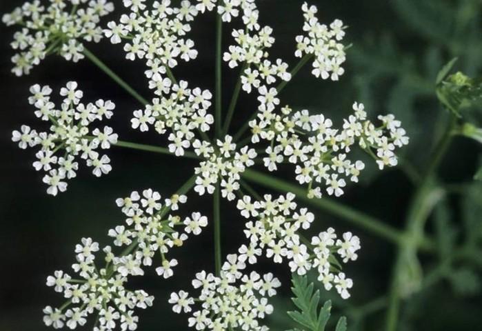 142850164 071218 1000 6 Смертельно опасные цветы, которые мы держим рядом с собой
