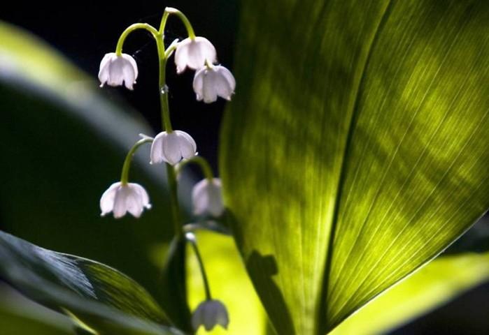 142850168 071218 1000 8 Смертельно опасные цветы, которые мы держим рядом с собой