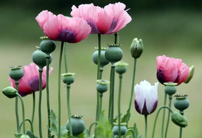 142850172 071218 1000 10 Смертельно опасные цветы, которые мы держим рядом с собой