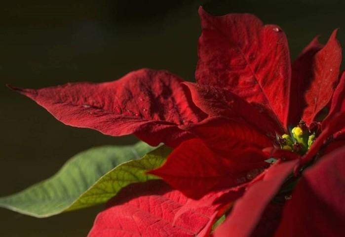 142850174 071218 1000 11 Смертельно опасные цветы, которые мы держим рядом с собой