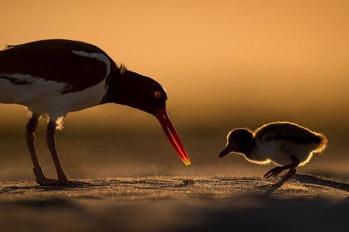 Потрясающие фотографии птиц участников конкурса Audubon Photography Awards 2018