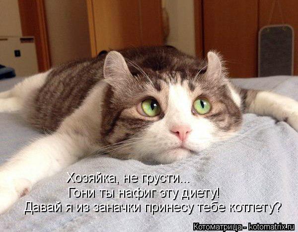 kotomatritsa_- (600x468, 178Kb)