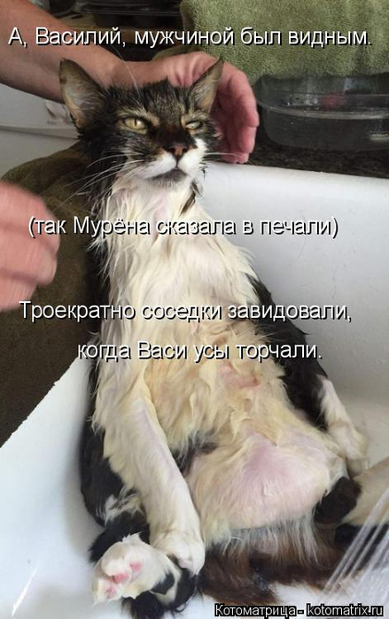 kotomatritsa_A (439x700, 276Kb)