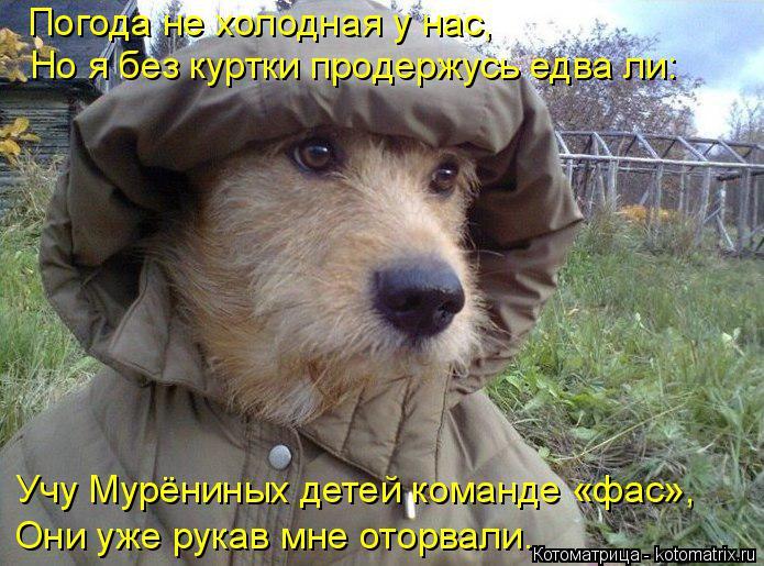 kotomatritsa_BX (695x515, 357Kb)