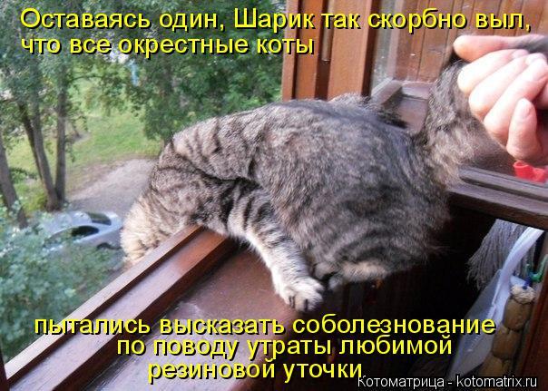 kotomatritsa_c (604x431, 272Kb)