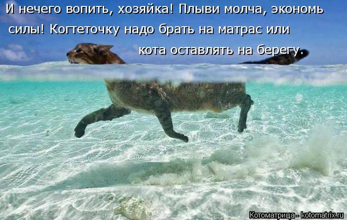 kotomatritsa_E (700x445, 347Kb)