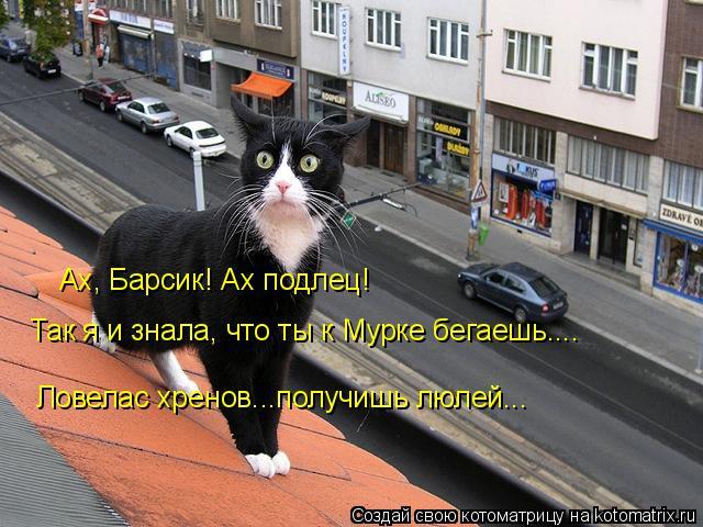 kotomatritsa_F (640x480, 261Kb)