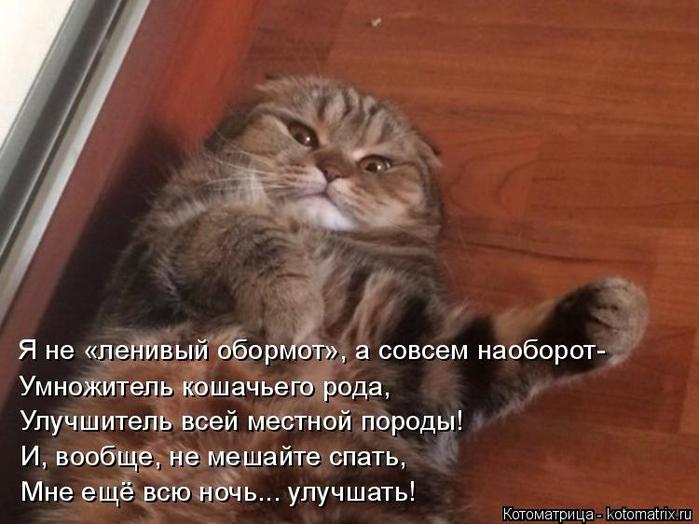 kotomatritsa_I (700x524, 314Kb)