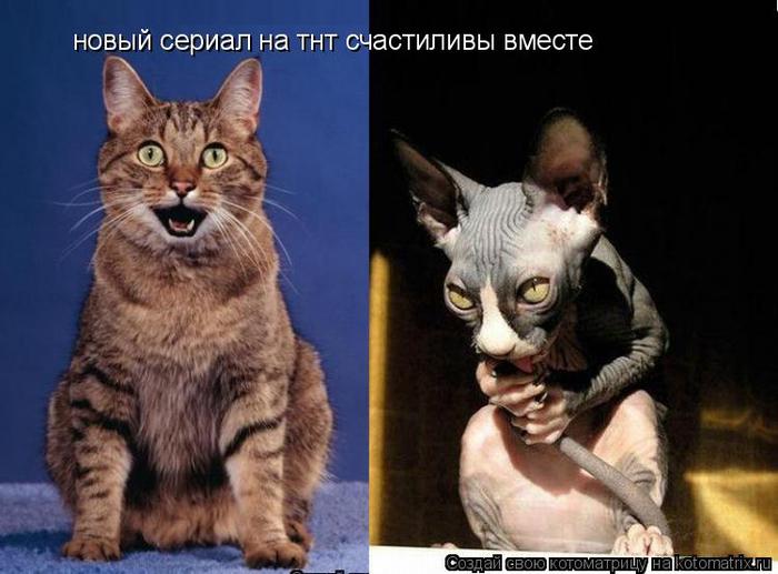 kotomatritsa_IS (700x517, 280Kb)