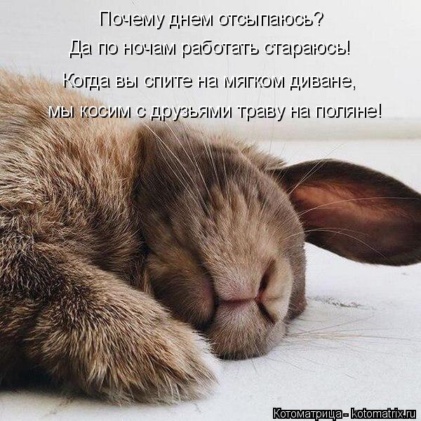 kotomatritsa_j (600x600, 254Kb)