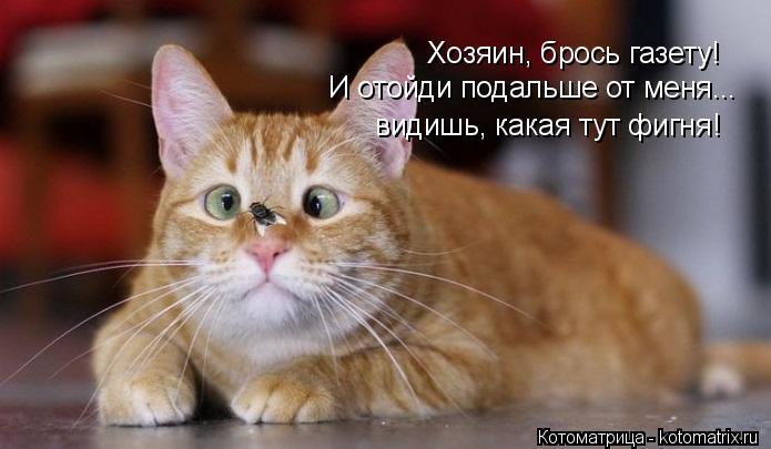 kotomatritsa_l (695x405, 168Kb)
