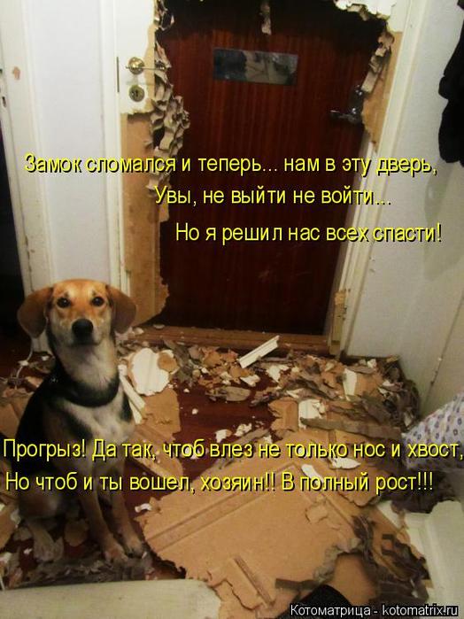 kotomatritsa_o (524x700, 391Kb)