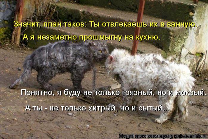 kotomatritsa_P (1) (700x468, 398Kb)