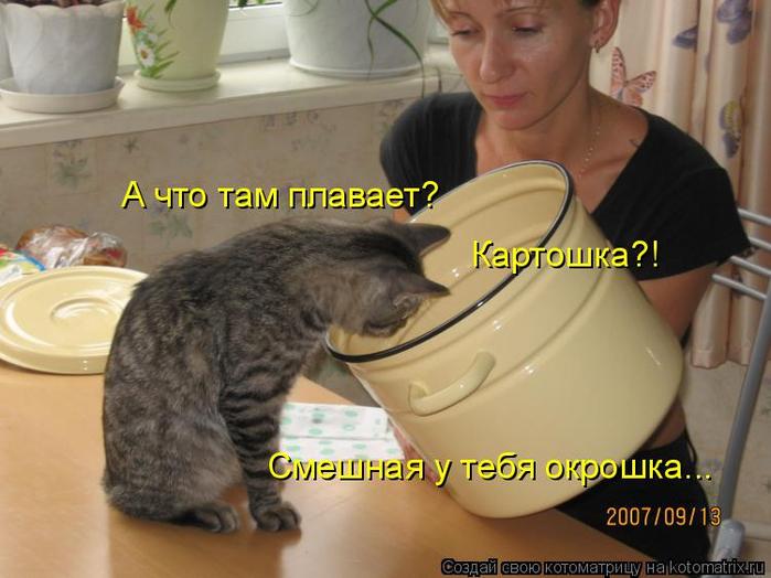 kotomatritsa_p (700x524, 318Kb)