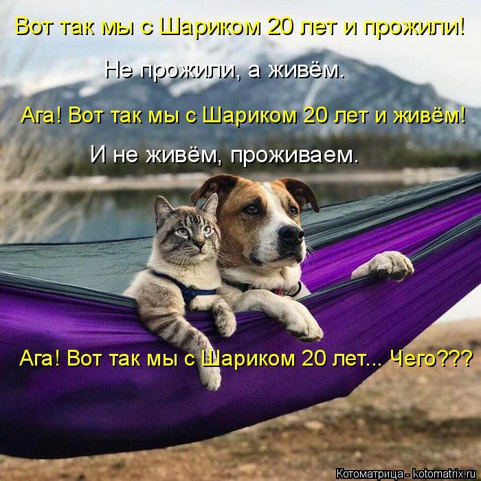 kotomatritsa_q (700x700, 428Kb)