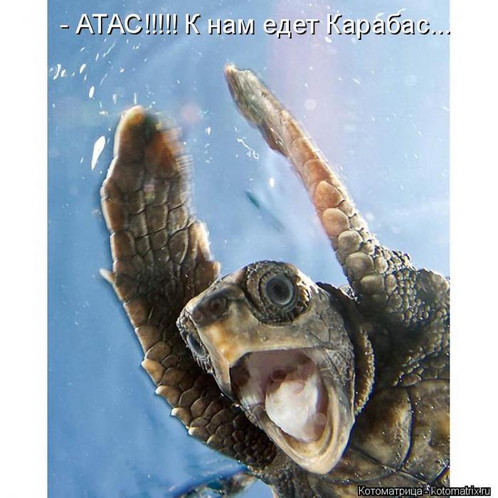 kotomatritsa_T (700x700, 380Kb)