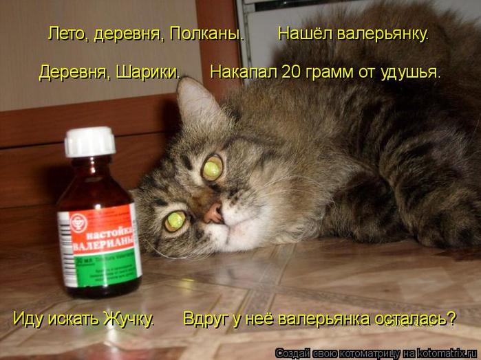 kotomatritsa_u (700x524, 377Kb)