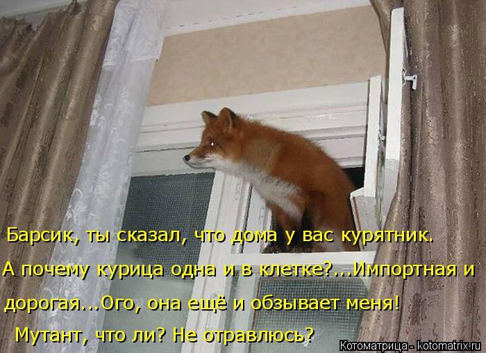 kotomatritsa_V (1) (700x508, 281Kb)