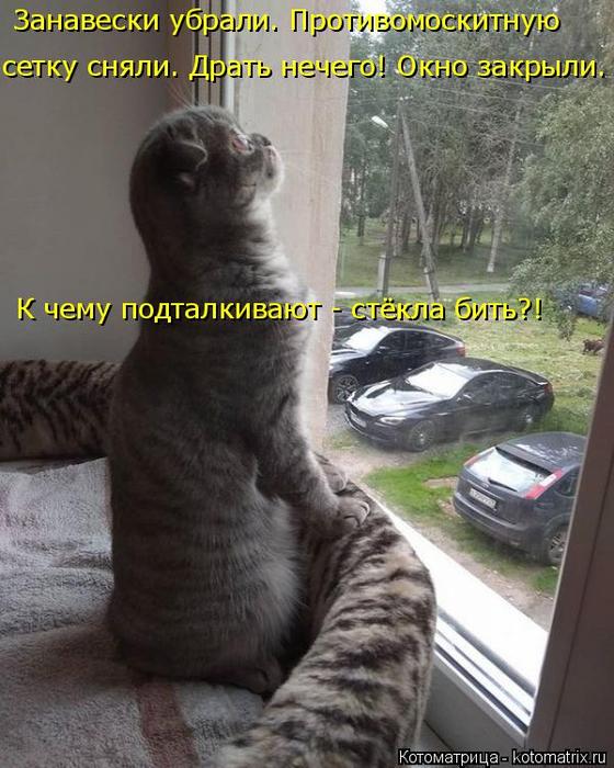 kotomatritsa_W (1) (560x700, 363Kb)