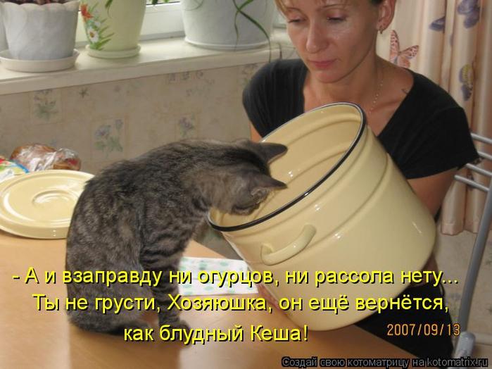 kotomatritsa_x (1) (700x524, 346Kb)