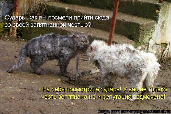 kotomatritsa_8 (700x468, 391Kb)