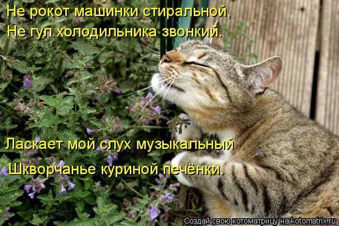 kotomatritsa_B (700x466, 357Kb)