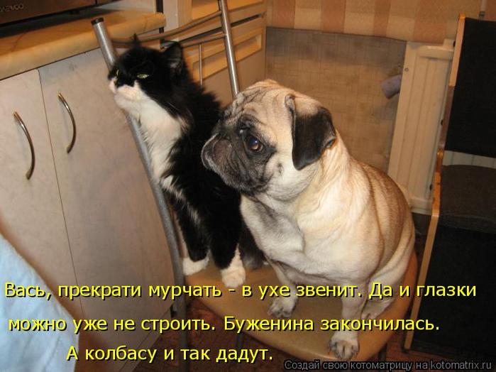 kotomatritsa_Q (700x524, 359Kb)