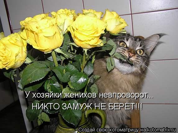 kotomatritsa_w (572x428, 196Kb)