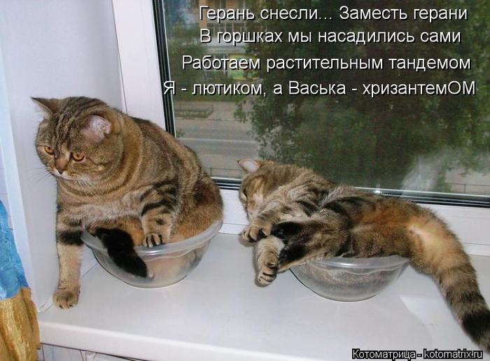 kotomatritsa_aw (700x516, 338Kb)