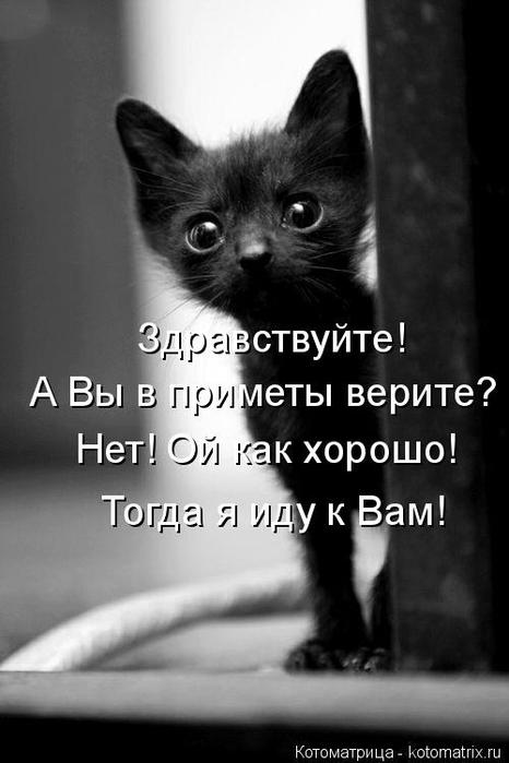 kotomatritsa_L (466x700, 139Kb)