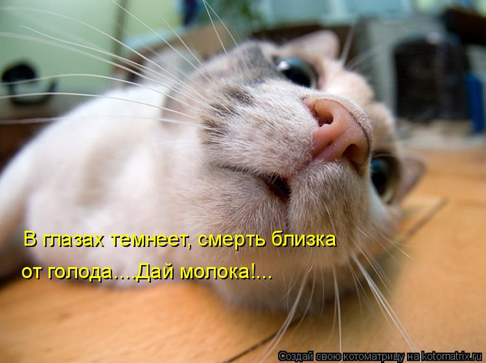 kotomatritsa_H (700x522, 313Kb)