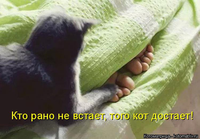kotomatritsa_j (700x486, 276Kb)