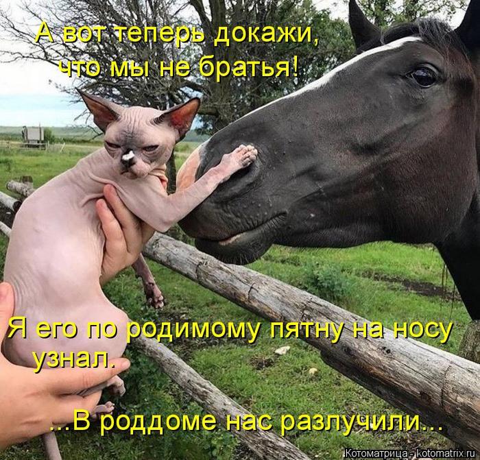 kotomatritsa_l (700x671, 566Kb)