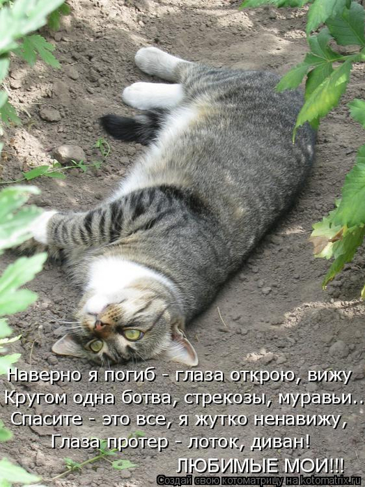 kotomatritsa_R (1) (524x700, 400Kb)