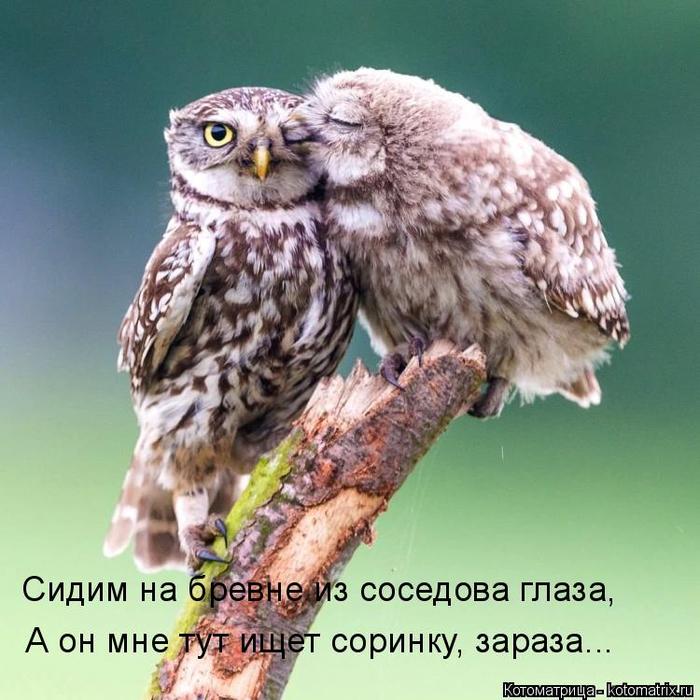 kotomatritsa__ (700x700, 418Kb)