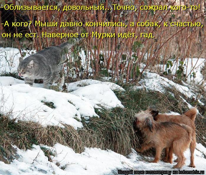 kotomatritsa_k (700x595, 578Kb)