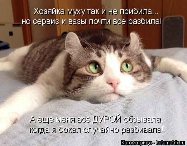 kotomatritsa_MD (600x468, 211Kb)